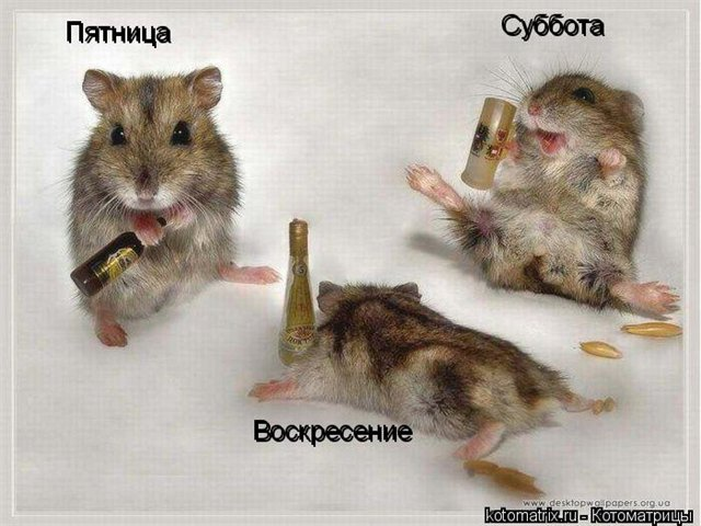 http://dfg.ucoz.ru/_fr/24/0556863.jpg